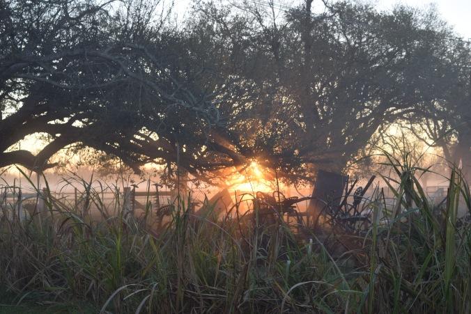 sun cane